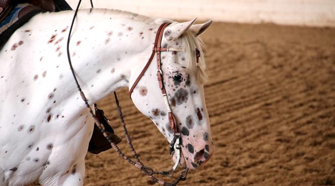 reining-3-3