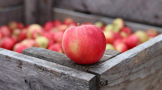 Äppeldagarna håller ställningen