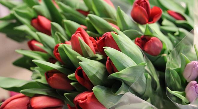 Köp en tulpan – och vårda den väl!