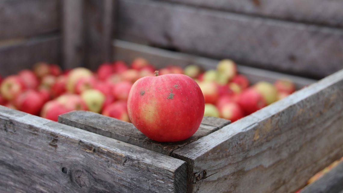 Äpplen till hungriga djur!